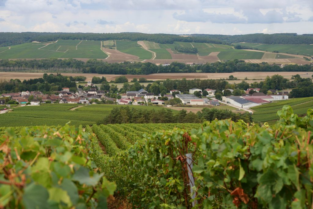 Vendanges 2018 - Famille Moutard